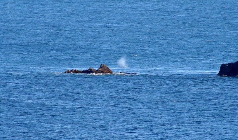 Watch the whales from Rainbow Rock - Brookings - Condomínio
