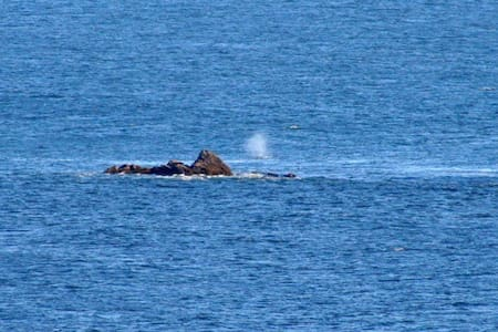 Watch the whales from Rainbow Rock - Brookings - Wohnung