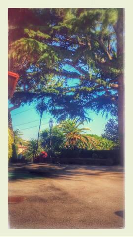 Valle Oliva B&b immerso nel verde - Campoleone/ Aprilia - Bed & Breakfast