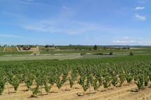 Les vignes des Corbières
