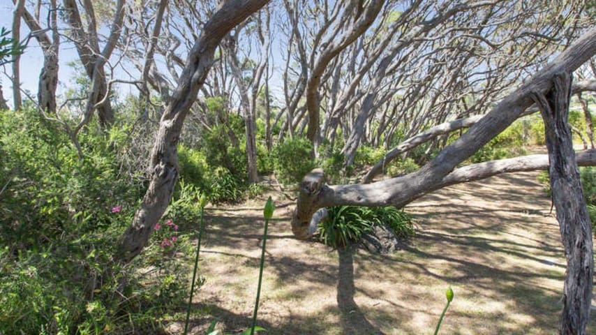 Magnificent moonah trees (Melaleuca Ianceolata) surround the property