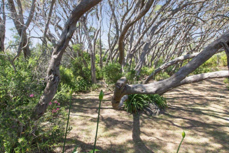 Magnificent moonah trees (Melaleuca Ianceolata) surround the property