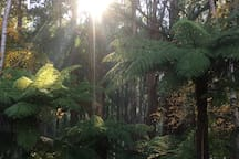 Surrounded in mountain ash and tree ferns