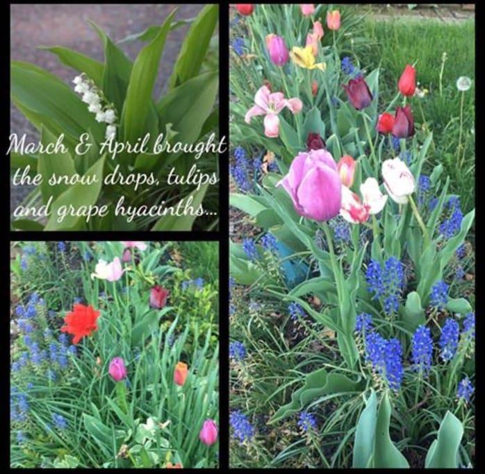 ...(just a FEW flowers...)