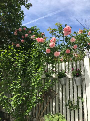 Enjoy the flowers in the garden!