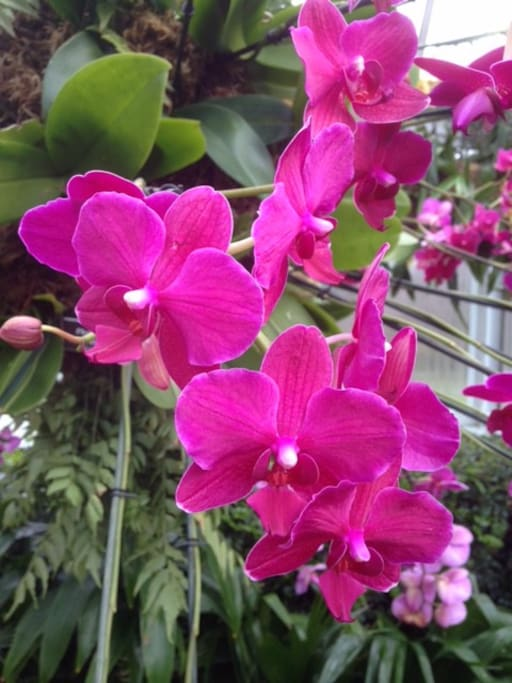 Orchids blooming in the garden