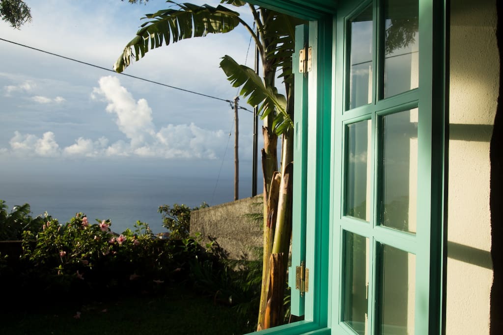 View from the bedroom  window  out to the sea with a banana tree too.