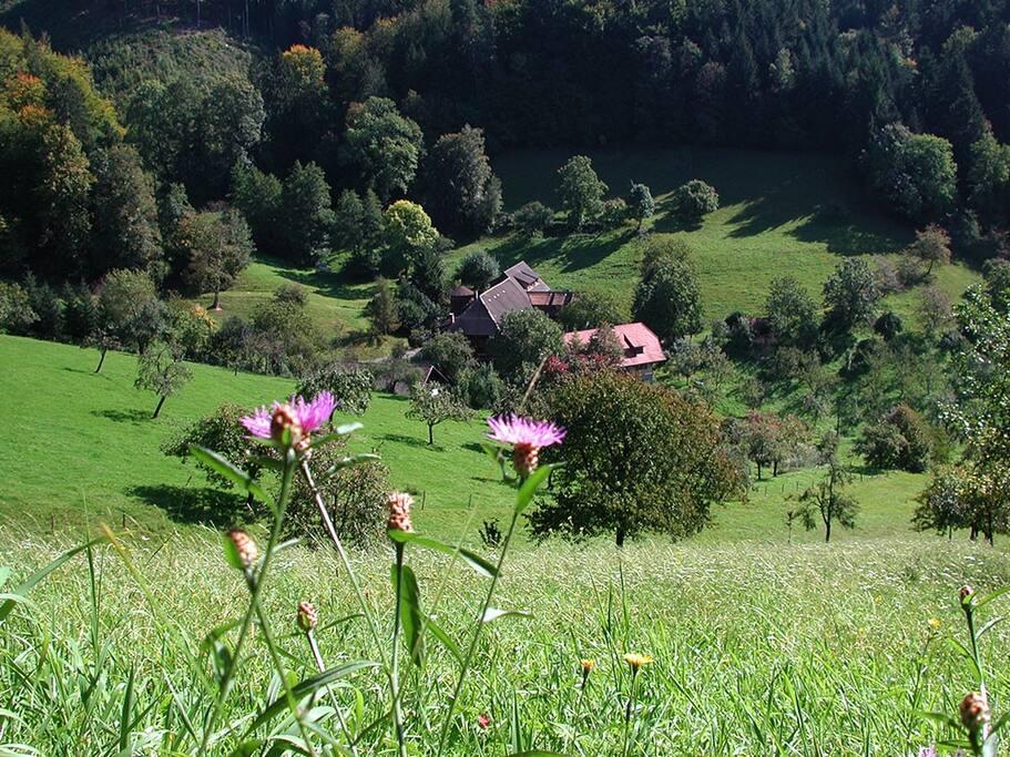 die einmalige Lage des Hofes, eingebettet zwischen Wald und Wiesen