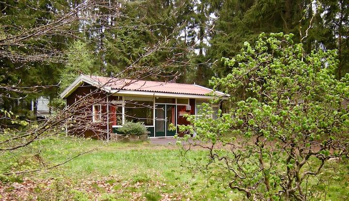 Norg:Lief boshuis + grote tuin voor max 4 personen
