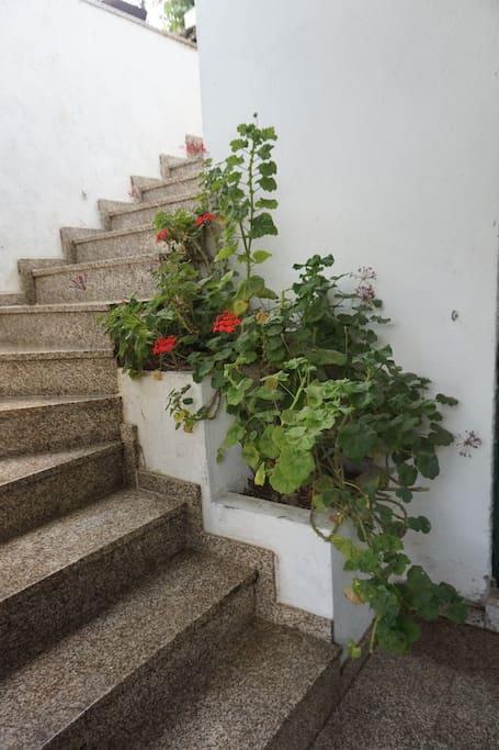 Escadas para a casa / Stairs to the house