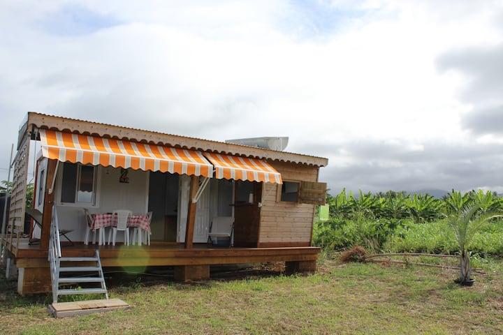 Jolie bungalow + visite d'une bananeraie offerte !