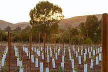 Casa Diego cuenta con su propio viñedo del varietal Monastrell donde podrás disfrutar de una vista panorámica desde nuestra terraza. Un espacio donde se respira paz y tranquilidad.