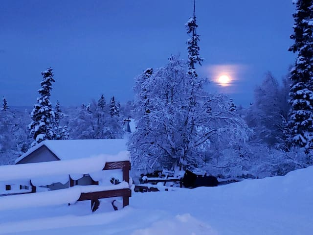 Forget-Me-Not Room - Alaska Sundance Retreat B&B
