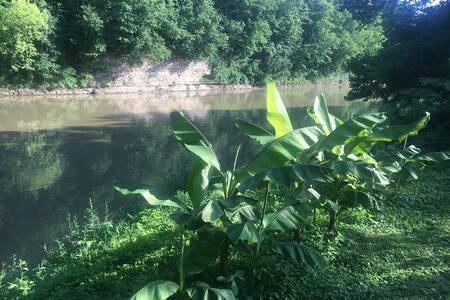 Adams River Retreat: The Savanah Room