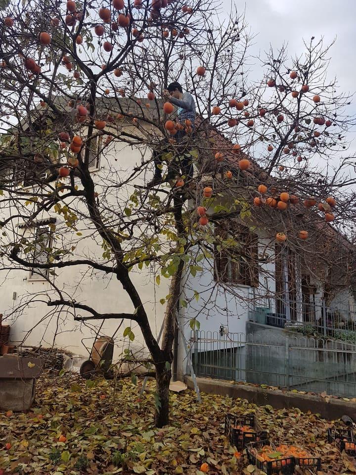 camera  in mansarda nelle vicinanze di Malpensa