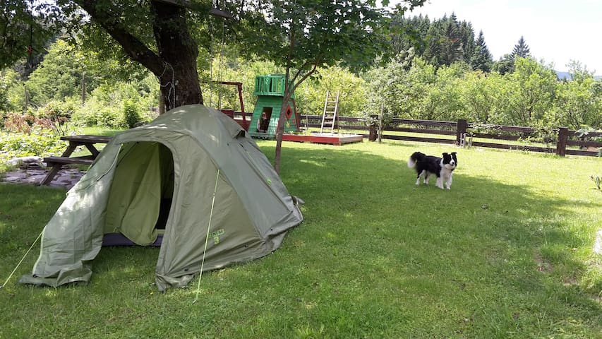 Camping on the green garden - Belsko - Teltta