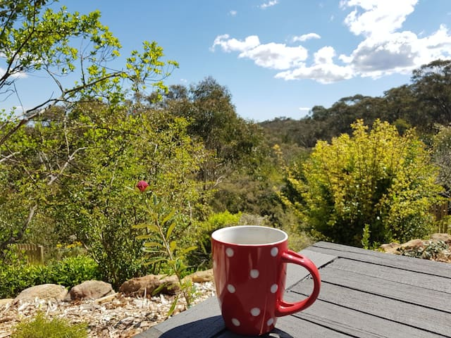 Sitting in the garden on the edge of the Bush, listening to the birds