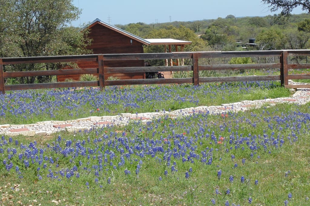Nestled in bluebonnets and other wildflowers