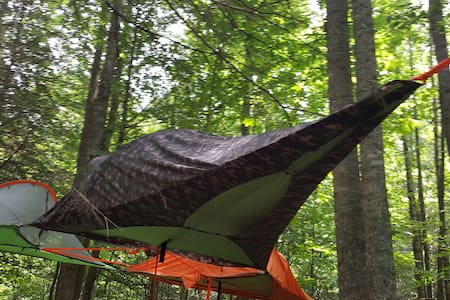 Mountains, National Forest, Tree Tent & Hammock!