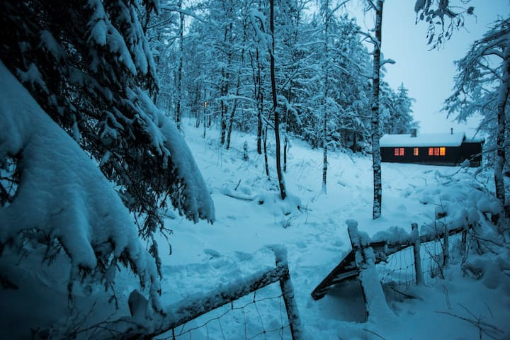 Winter Wonderland in the forrest of Oslo