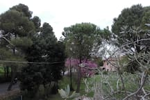 La casa fra i pini