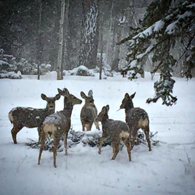 Deer gather in front of Selah House. We frequently see elk as well. Pets are welcome