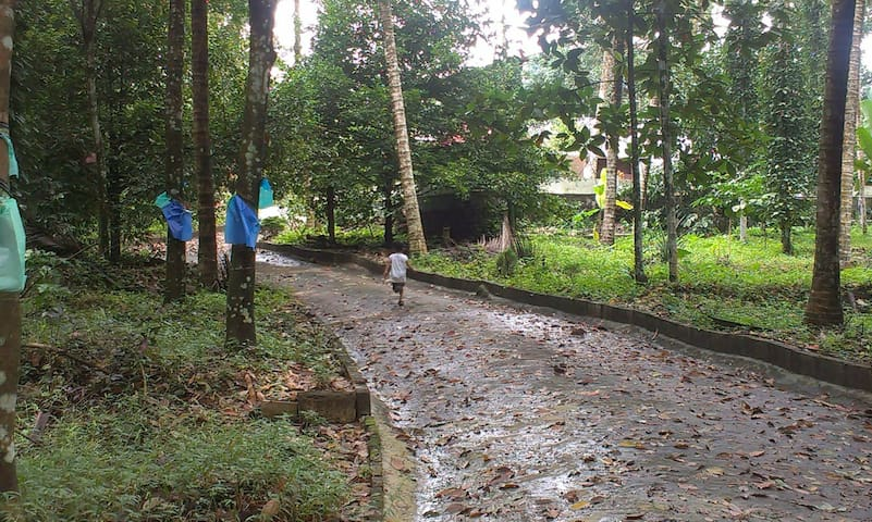 Plantation Home stay near Thekkady National Park - Dům