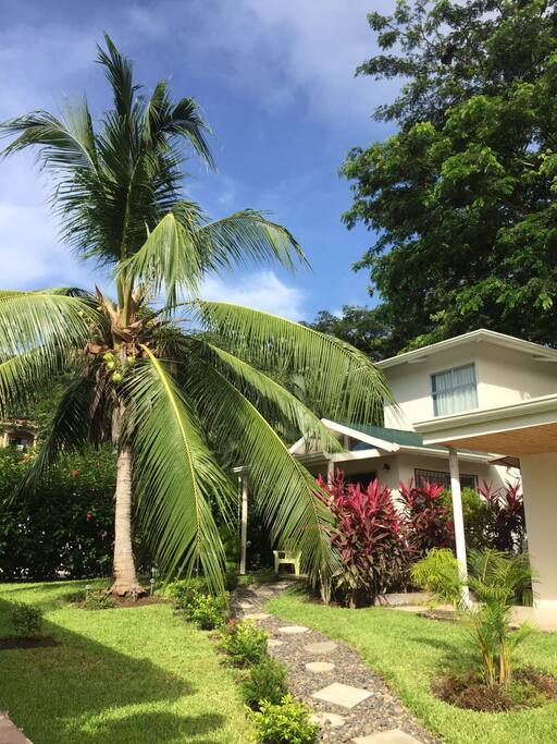 Lovely coconut tree and gardens on site.