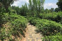 Meditation footpath surrounding Octagon