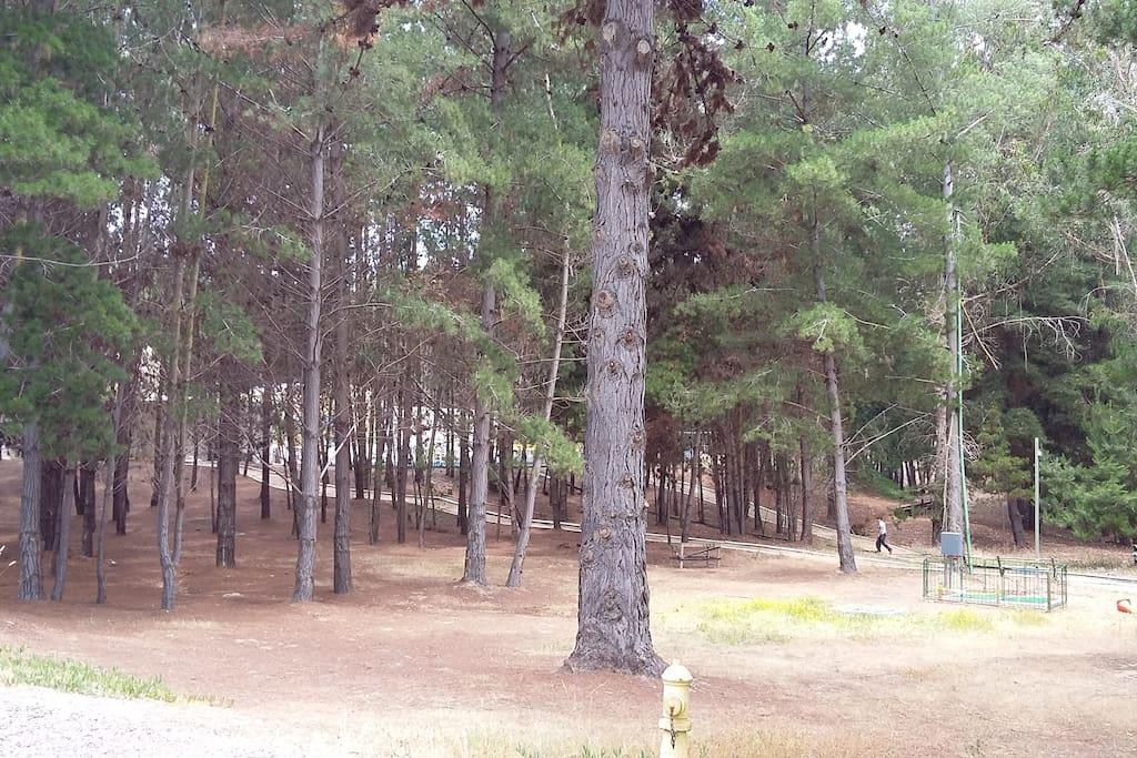 Bosque interior.