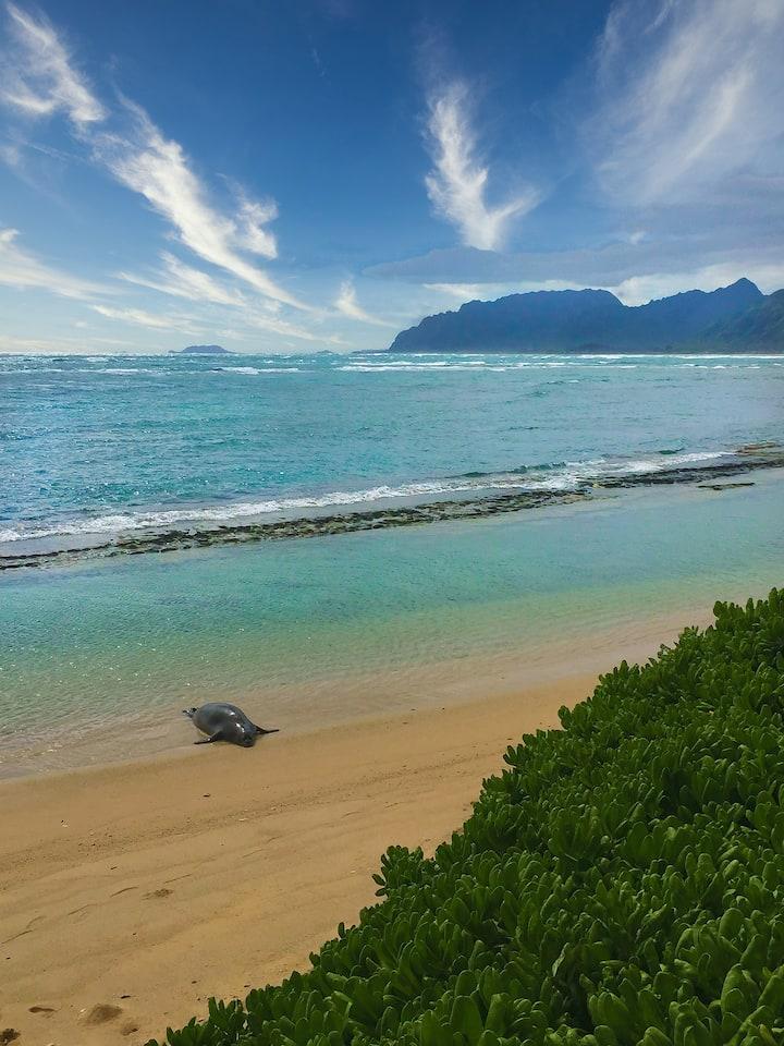 Beachfront Stylish Retreat | Sandy Beach Access
