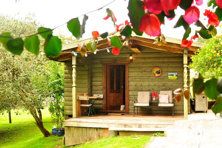 Log Chalet set in Native Bush - Rotoiti Forest - Bed & Breakfast