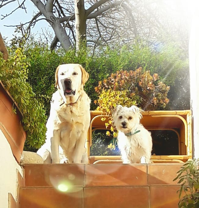 Nefeli and Semeli, our friendly dogs!!!
