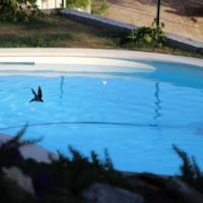 Shared pool - with the swallows