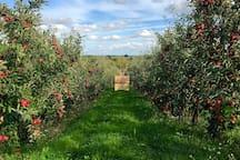 Local orchard & walks