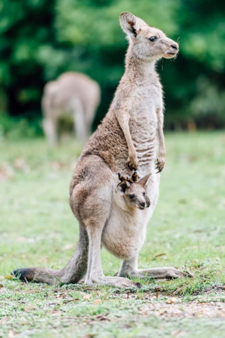 """Kangaroos and wallabies!"" - Mariana"