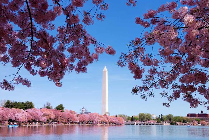 2 Bedroom Deluxe/National Harbor- Cherry Blossoms!