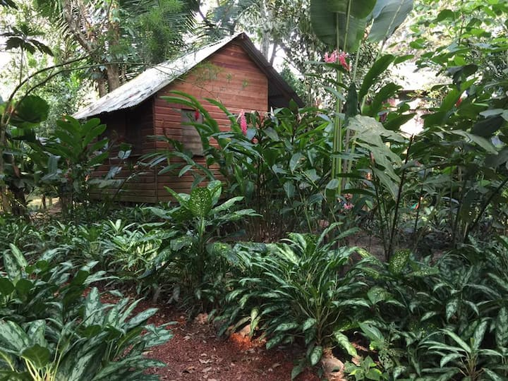 Parrot Nest Heliconia Garden Cabin