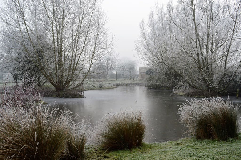 View of our pond on a frosty morning