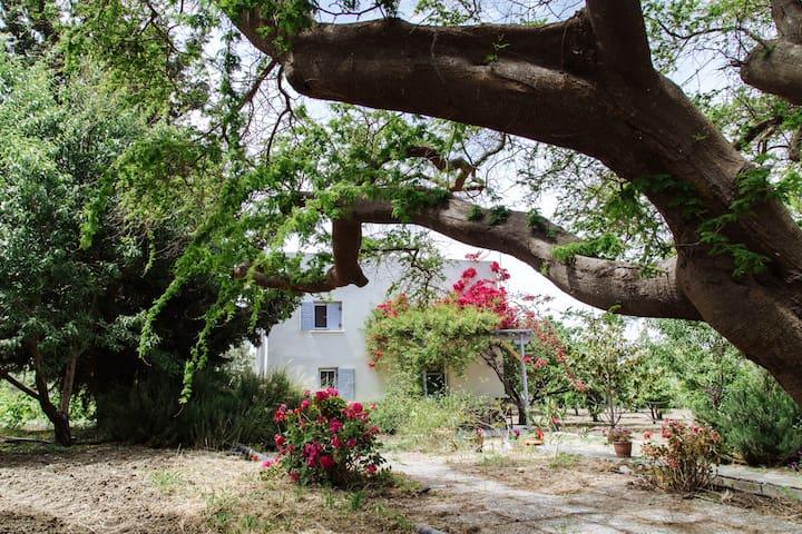 Margouno Eco Cottage, Eggares, Naxos