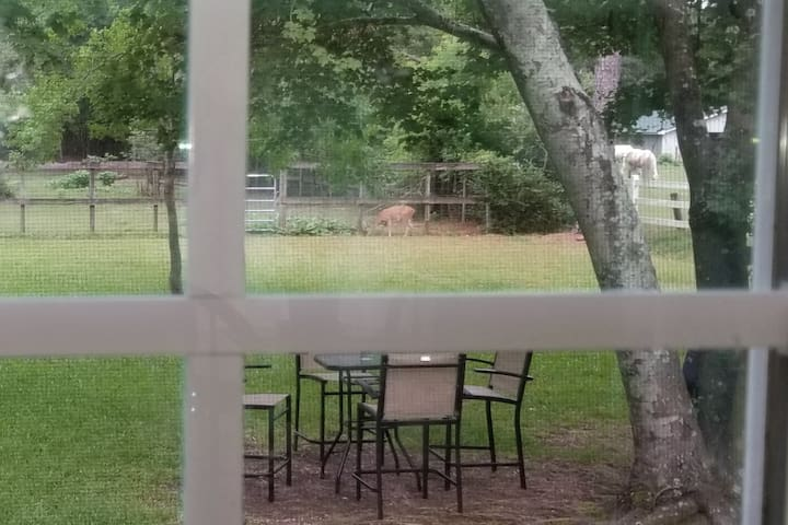 Looking out kitchen window...deer & horses