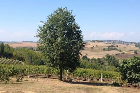 Open space sui vigneti del Monferrato - Viarigi