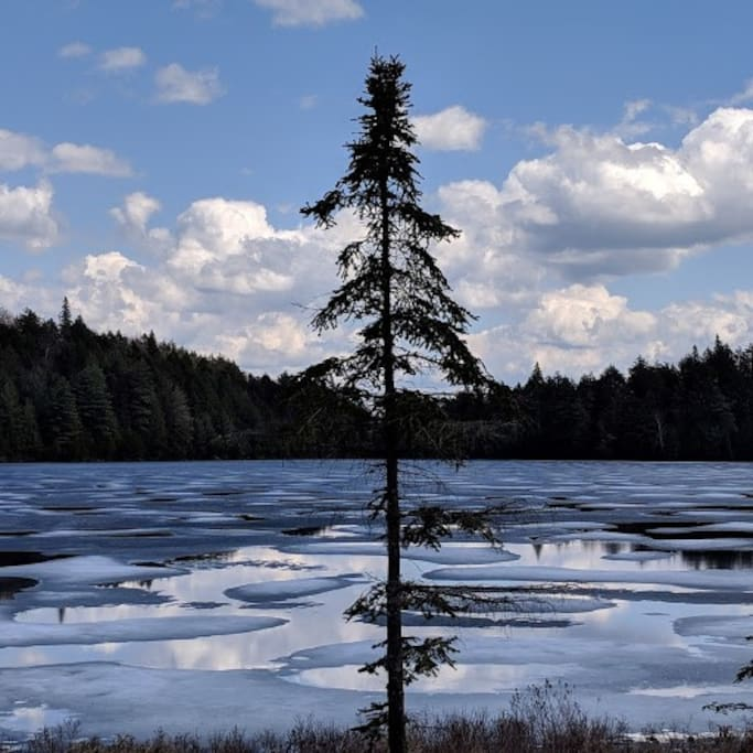 Algonquin Park in May