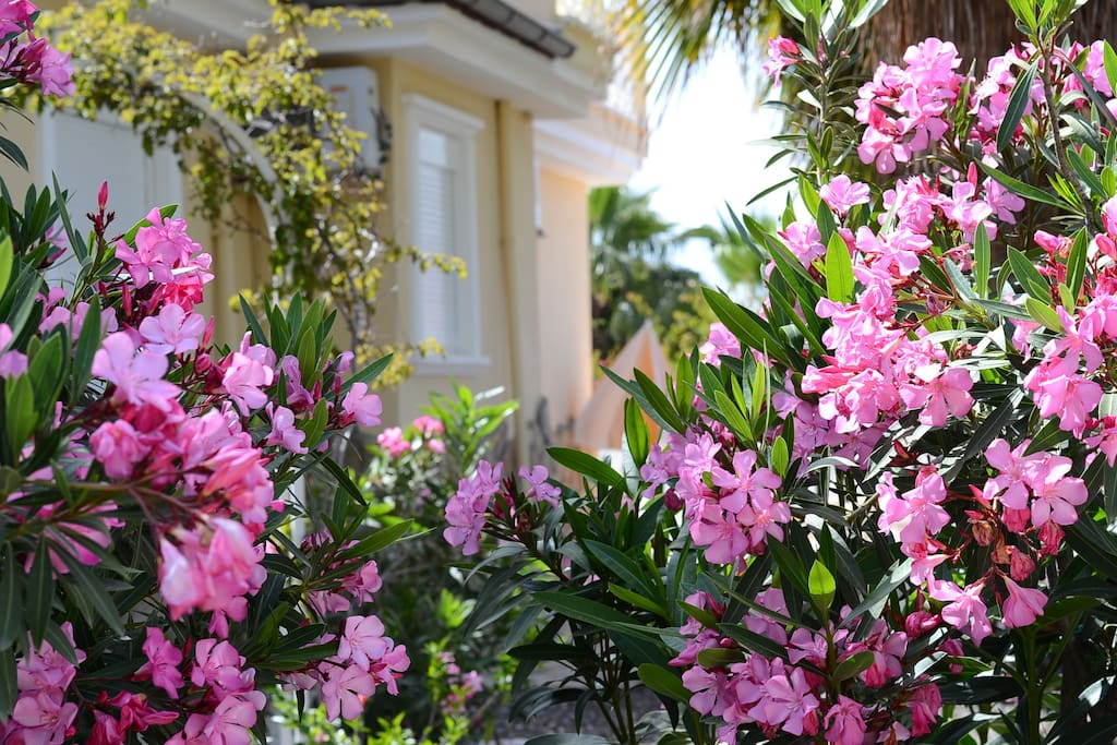 All areas of the garden are bordered with pink rose, oleander and bougainvillea blossoms. Some areas are totally private and offer views of the mountain and forest