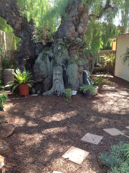 Magical 100 year old California Pepper tree