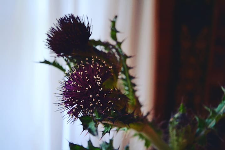 In summer, thistles grow along the driveway