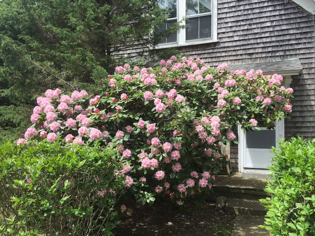 Two bedroom suite in Woods Hole Village