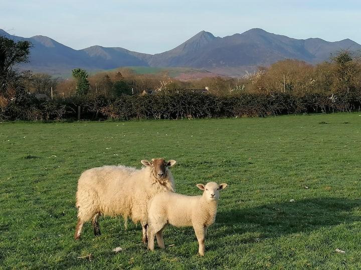 Traditional Sheep Farm Cottage Near Killarney