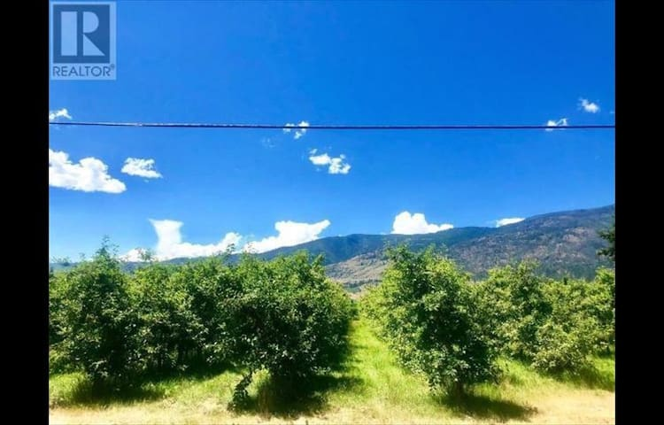 Organic Fuji apple orchard