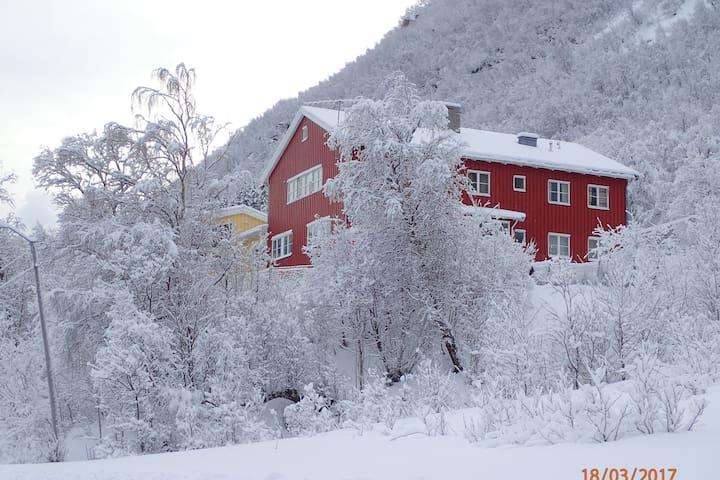 Skogtun - Engenes - Pis